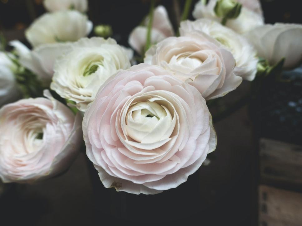 การเลือกช่อดอกไม้ ให้กับวันพิเศษควรเลือกแบบไหนดี